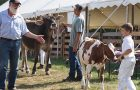 Cattle Show image
