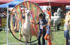 Llama Show image