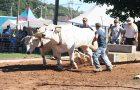 Draft Oxen image